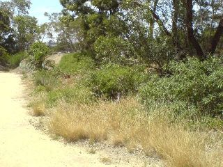 is turned into an area of native grasses, flowers and shrubs