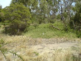 is turned into an area of native grasses, flowers and shrubs with the bank covered in grasses and saltbush