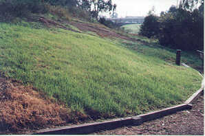 A 'lawn' of non-native grass
