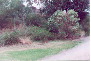 Shelter is provided for small birds in dense and/or prickly shrubs
