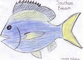 Southern Bream by Louisa Kitchin